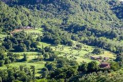 一个农场的看法有橄榄树小树林的 库存图片