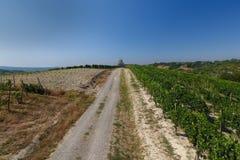 一个农村风景的看法与乡下公路和葡萄园的 免版税库存图片