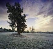 一个冬天早晨 免版税库存照片