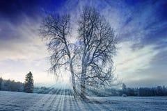 一个冬天早晨 免版税库存图片