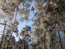 一个冬天晴天,与用雪盖的一个土气庭院的一个农村风景 树冻结的分支在霜的反对天空蔚蓝 库存照片