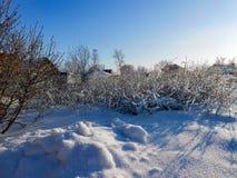 一个冬天晴天,与用雪盖的一个土气庭院的一个农村风景 树冻结的分支  在背景中被看见 免版税库存照片
