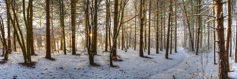 一个冬天的步行 免版税库存照片