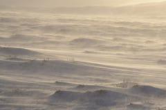 一个冷和有风早晨在冰岛 图库摄影