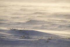 一个冷和有风早晨在冰岛 免版税库存图片