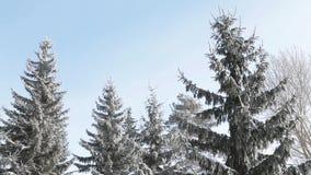 一个冷的下午的冬天森林 影视素材