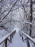 一个冷的冬日 库存照片