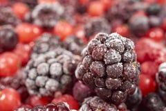 一个冷冻黑莓的宏观射击 免版税库存图片