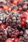 一个冷冻黑莓的宏观射击 库存照片