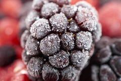 一个冷冻黑莓的宏观射击 库存图片