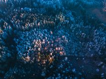 一个冻森林在冬天,空中射击的背景纹理 库存图片