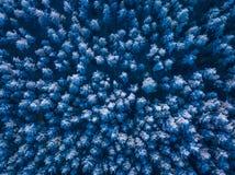 一个冻森林在冬天,空中射击的背景纹理 免版税库存图片