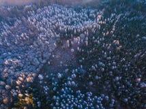 一个冻森林在冬天,空中射击的背景纹理 库存照片