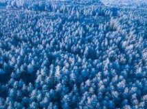 一个冻森林在冬天,空中射击的背景纹理 免版税库存照片