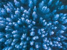 一个冻森林在冬天,空中射击的背景纹理 免版税图库摄影