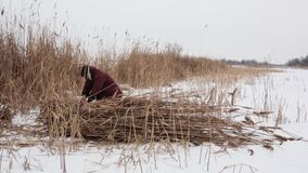 一个冻湖的一个村民在一寒冷冬天天会集干燥芦苇入干草堆并且采取他们家庭温暖房子和烧伤t 股票录像