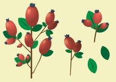 一个分支用红色莓果和叶子 向量例证