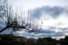 一个分支的剪影,用莓果,秋天 免版税库存照片