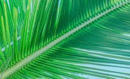 一个分支的树干与棕榈树的叶子的 免版税库存图片