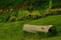 一个切好的树词根在kodaikanal小山chettiar公园 免版税图库摄影