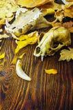 一个动物的头骨在堆的秋叶 图库摄影