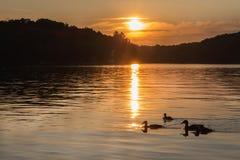 一个北湖的风景日落的与鸭子 免版税库存图片