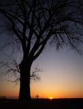 一个十字架的剪影在日落的大树下 库存照片