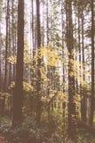 一个厚实的森林的美丽的射击在晚上 库存图片