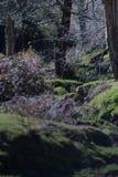 一个厚实的森林 库存图片