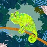 一个变色蜥蜴的五颜六色的图画在一棵树的分支的在密林 皇族释放例证