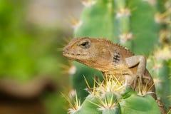 一个变色蜥蜴的图象在自然背景的 爬行动物 免版税库存照片
