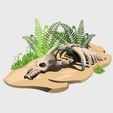 一个古老动物的化石骨骼在石头的 免版税库存照片
