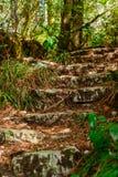 一个古老楼梯的废墟在密林 免版税库存图片