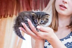 一个可爱的女孩拿着在她的手上的一只小的小猫 对a的爱 图库摄影