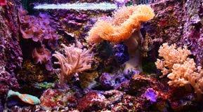 可爱的水族馆 库存照片