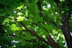 一个叶茂盛结构树 免版税库存图片