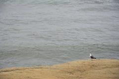 一个唯一海鸥观看海洋 免版税库存照片
