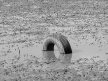 一个唯一轮胎被埋没入显示仅一半它的沼泽地地面 库存照片