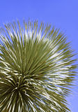 一个园林植物的叶子 免版税库存图片