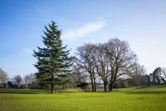 一个地方公园在冬天 免版税图库摄影