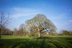 一个地方公园在冬天 免版税库存图片