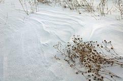 一个处女被雪包围住的领域 库存图片