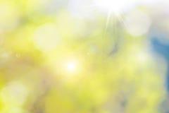 一个夏天庭院的被弄脏的背景有阳光和highligh的 免版税库存照片