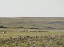 一个夏天湖的照片乌拉尔寒带草原的山的 图库摄影