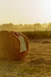 一个夏天sundress的美丽的女孩在日落值得关于干草堆 库存图片