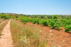 一个多小山风景的葡萄园 库存照片
