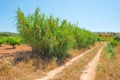 一个多小山风景的葡萄园 免版税图库摄影