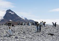 一个多岩石的海滩的海狗企鹅国王和南美 免版税库存照片