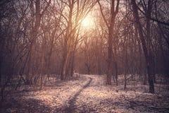 一个多雪的森林的葡萄酒照片 库存照片