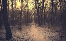 一个多雪的森林的葡萄酒照片 免版税库存照片